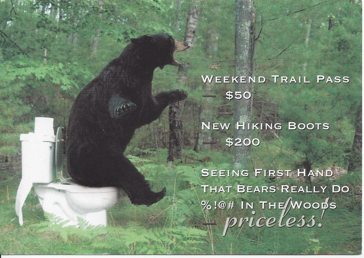 Does a Bear Shit In The Woods Postcard